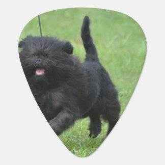 Cute Affenpinscher Dog Pick