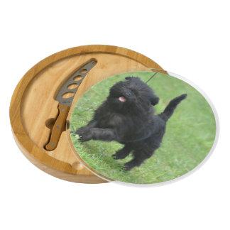 Cute Affenpinscher Dog Round Cheeseboard