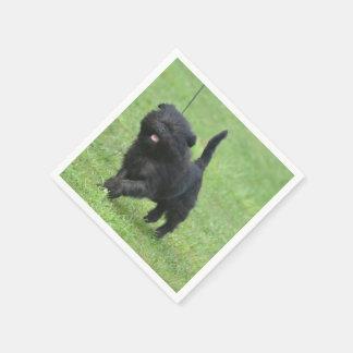 Cute Affenpinscher Dog Paper Napkins