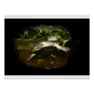 Cute African Side Necked brown turtle black frame Poster