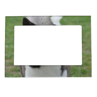 Cute Akita Picture Frame Magnet