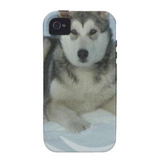 Cute Alaskan Malamute iPhone 4 Case
