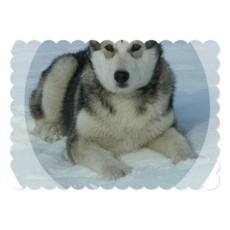 Cute Alaskan Malamute Personalized Announcement