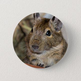 Cute Alert Degu Photograph Button