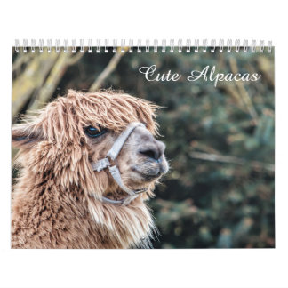 Cute Alpaca Calendar Fully Customizable