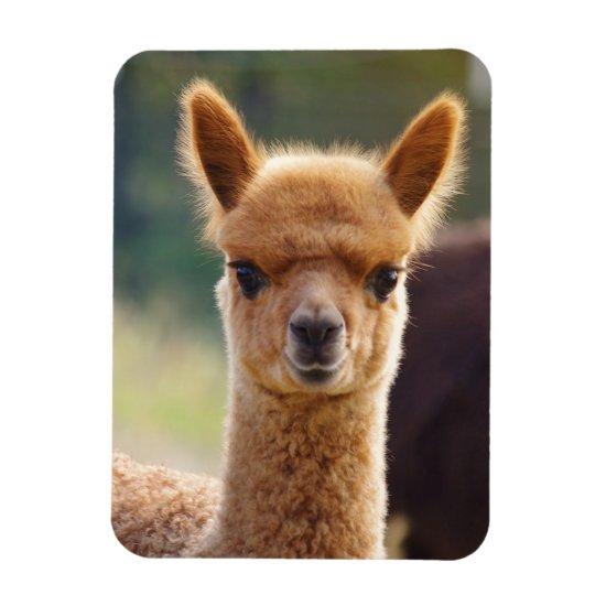 Cute Alpaca Magnet