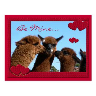 Cute Alpaca Valentines Day Postcard