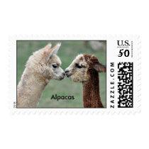 Cute Alpacas kissing stamp