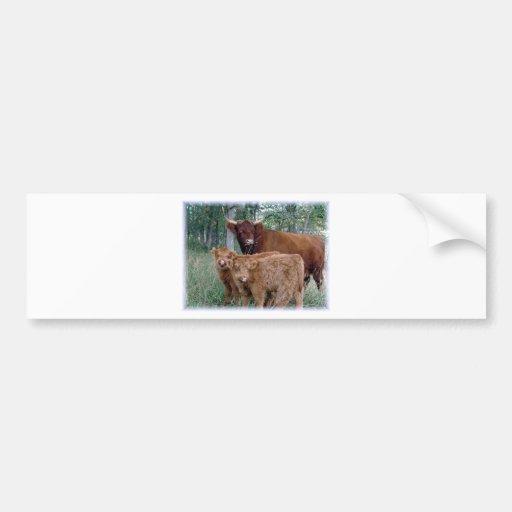 Cute and adorable fluffy fatty Highland calves Car Bumper Sticker