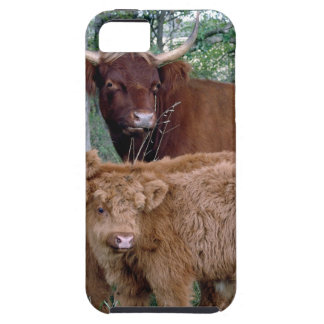 Cute and adorable fluffy fatty Highland calves iPhone SE/5/5s Case