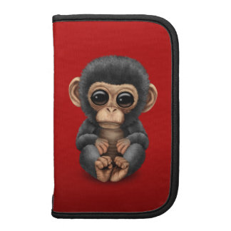 Cute and Curious Baby Chimpanzee on Red Organizer