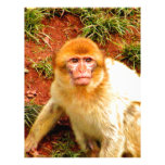 cute and curious monkey personalized letterhead