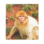 cute and curious monkey scratch pads