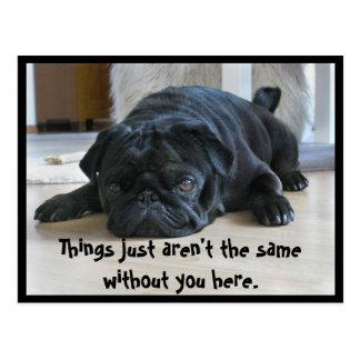 Cute and Lazy Black Pug Puppy Postcard