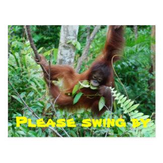 Cute Animal Swingers Party Invitation Postcard