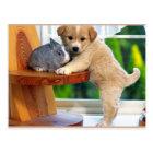 Cute Animals Postcard