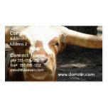 Cute Ankhole Cattle Business Card