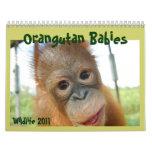 Cute Apes Wildlife Calendars