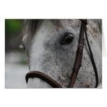 Cute Appaloosa Horse Greeting Card