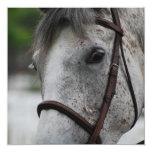 Cute Appaloosa Horse Invitations