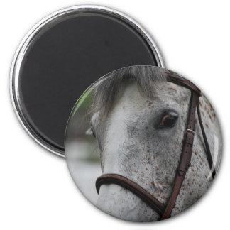 Cute Appaloosa Horse Magnet Fridge Magnet