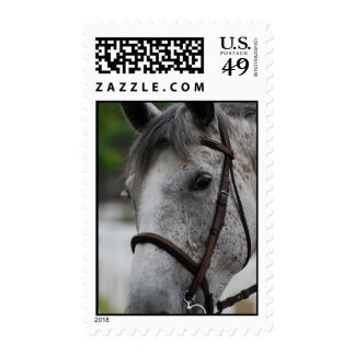 Cute Appaloosa Horse Postage Stamp