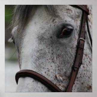 Cute Appaloosa Horse Poster