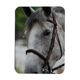 Cute Appaloosa Horse Premium Magnet Rectangular Magnet