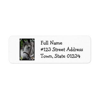 Cute Appaloosa Horse Return Address Mailing Label