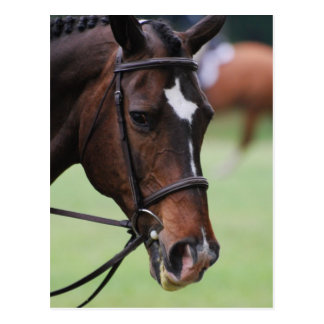 Cute Arabian Horse Postcards