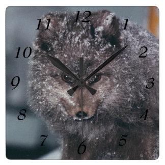 Cute Arctic Blue Phase Winter Fox Photo Designed Square Wall Clock