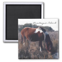 Cute Assateague Mare - Magnet
