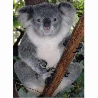 Cute Aussi Animal Koala Bear  Peace Love Destiny Statuette