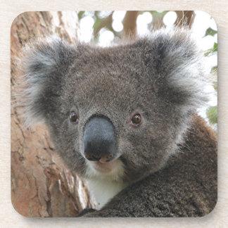 Cute Australian koala 2 Coaster