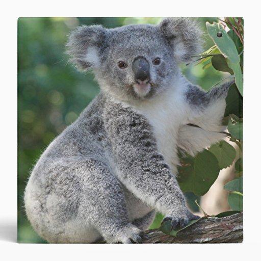 Cute Australian koala in gum tree binder | Zazzle