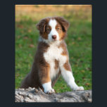 "Cute Australian Shepherd Dog Puppy Pet  Paperprint Photo Print<br><div class=""desc"">A cute red tri Aussi puppy leaning against a knobby tree log. A puppy-eyed dog photo taken by Katho Menden, this animal photo on a photo paper poster is a gift idea for dog and pet lovers. http://www.zazzle.com/kathom_photo If you are seeing a design that is not available on your desired...</div>"