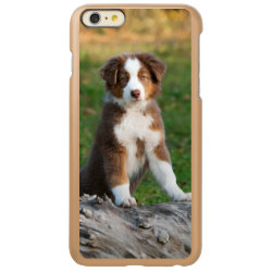 Incipio Feather® Shine iPhone 6 Plus Case with Australian Shepherd Phone Cases design