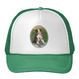 Cute Australian Shepherd Dog Puppy Photo - cap