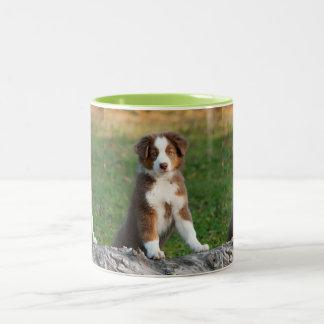 Cute Australian Shepherd Dog Puppy Photo Portrait Two-Tone Coffee Mug