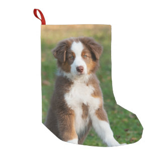 Cute Australian Shepherd Dog Puppy - Santa mantle Small Christmas Stocking