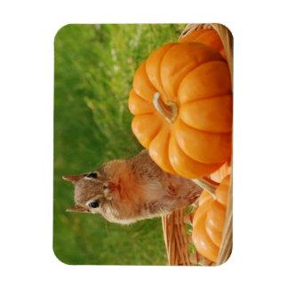 Cute Autumn Chipmunk Magnet