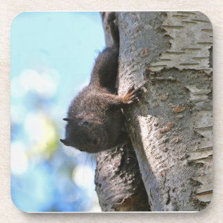 Cute Baby Black Squirrel Drink Coasters