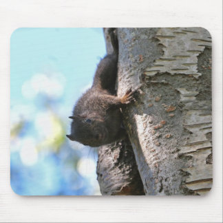 Cute Baby Black Squirrel Mouse Pad