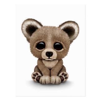 Cute Baby Brown Bear Cub on White Postcard