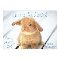 cute easter bunny invitations zazzle