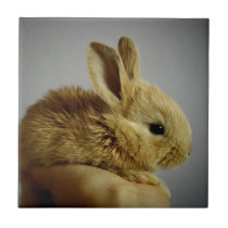 Cute Baby Bunny in Hand Tile