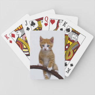 Cute Baby Cat Kitten Funny Gym Photo .. Playing Cards