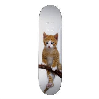 Cute Baby Cat Kitten Funny Gym Photo - Skateboard Deck