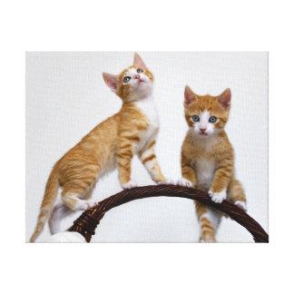 Cute Baby Cats Kittens Funny Gym Photo - Wrapped Canvas Print