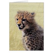 Cute baby Cheetah Cub